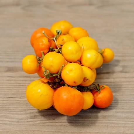 Pomodori d'Inverno da ARIDOCOLTURA