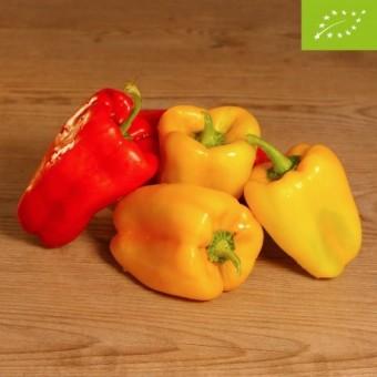 Peperoni gialli e rossi BIO