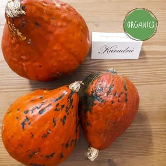 Zucca Hokkaido Organic