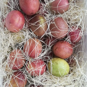 """Etna Passion"" Fruit BIO"