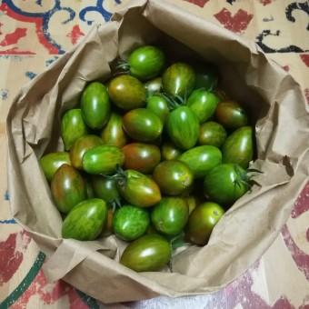 Pomodori Zebrati Verdi - Azienda Agricola Calcagnile