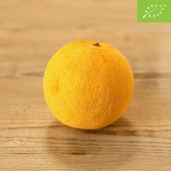 Melone Galia BIO