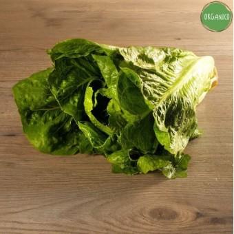 Insalata Lattuga Romana Organic