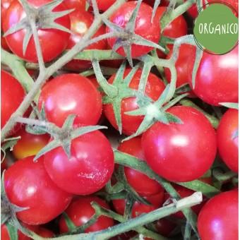 Pomodori Ciliegino - Azienda Agricola Calcagnile
