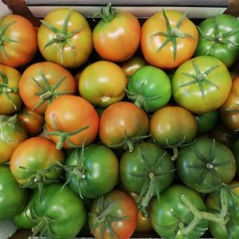 Pomodori Insalatari - Azienda Agricola Calcagnile