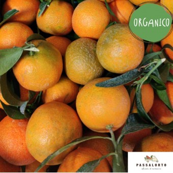 Clementine ORGANIC - Sail