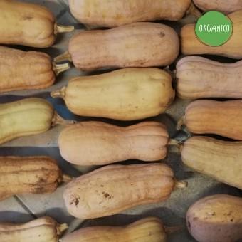 Zucca Violina Rugosa - Tenute Gervasi Agricoltura Naturale
