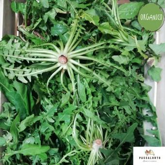 Cicorie Selvatiche Organic - FunghiSalento